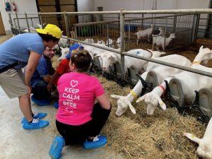 Visita in stalla delle capre con i bimbi
