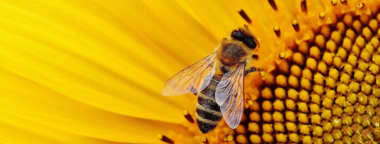 Caldo anomalo risveglia le api