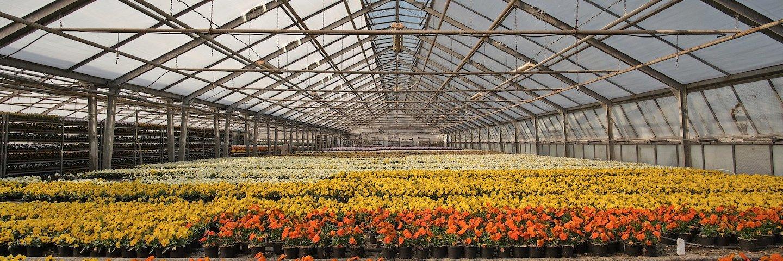 Florovivaismo agricolo: ok di Regione Lombardia all'apertura