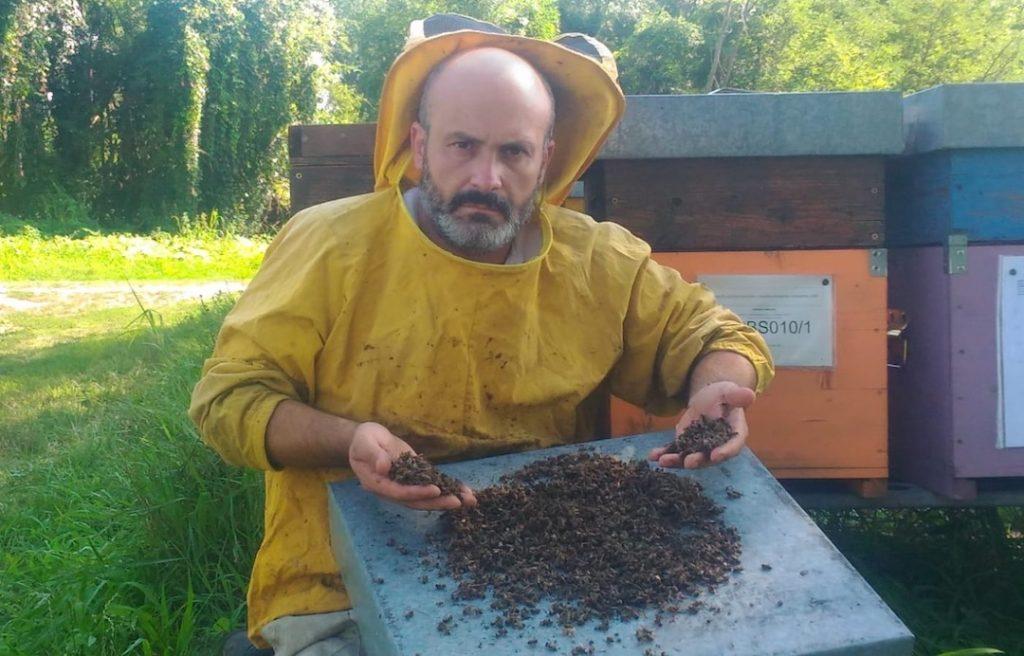 Moria di api: la testimonianza di Edoardo Mombelli