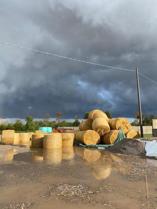 maltempo a Brescia, i danni alle aziende agricole della bassa